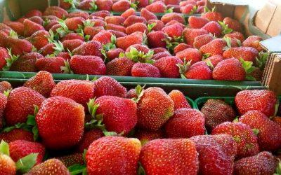 2019: a fruitful market