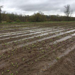 Farm field flooded with rain