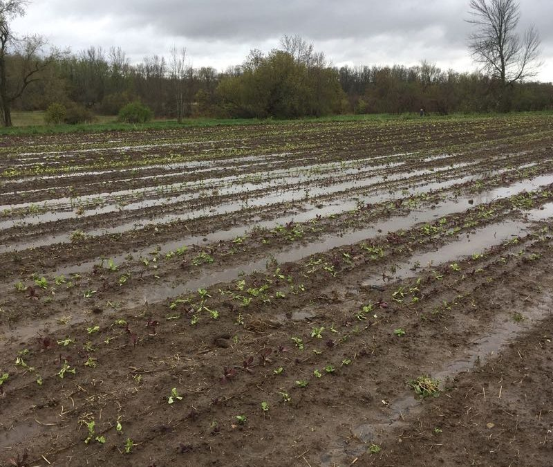 Weather Plays A Significant Part When It Comes To Growing Food